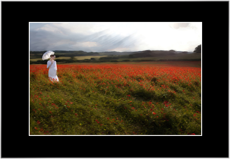 Poppies Large - from Kate Jackson Art